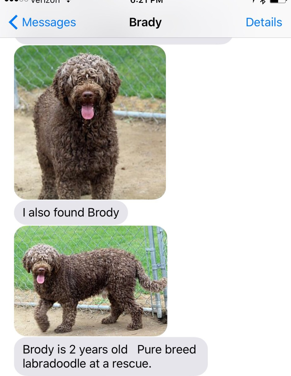 brody text