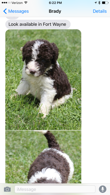 dog text 1